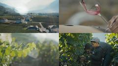 """Vorschaubild für News """"color grading chevaliers"""" vom 14.03.2017"""